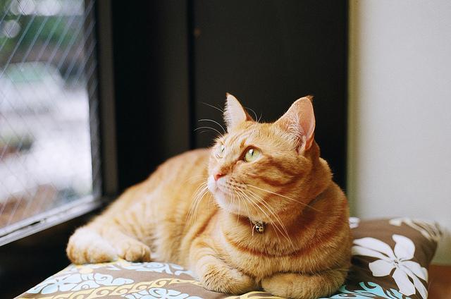 【可愛い猫ちゃんとふれあい放題!大阪猫カフェ4選!】