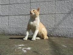 【ネコカフェより猫島!】楽園すぎるネコアイランド、福岡県・相島に行ってきた