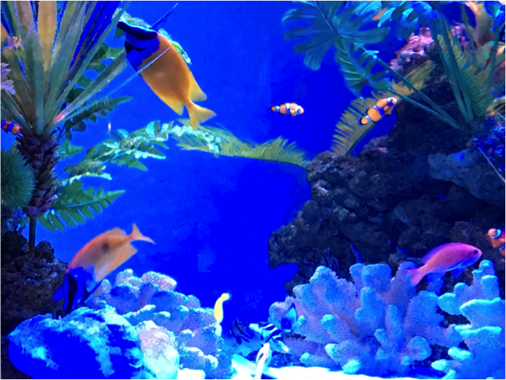 【神戸】水族館なう!?ペンギンやウミガメを見ながらお酒や食事が楽しめるお店まとめ