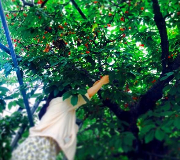 今年の春はサクランボ狩り! 関東圏人気スポットを紹介!