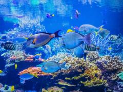 サクラ色の水族館が幻想的! 音・光・映像×生き物の最先端