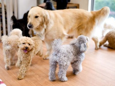 ワンコと戯れる空間♡人懐っこい犬たちと一緒にお散歩もできちゃう《DOG HEART fromアクアマリン》が人気♪